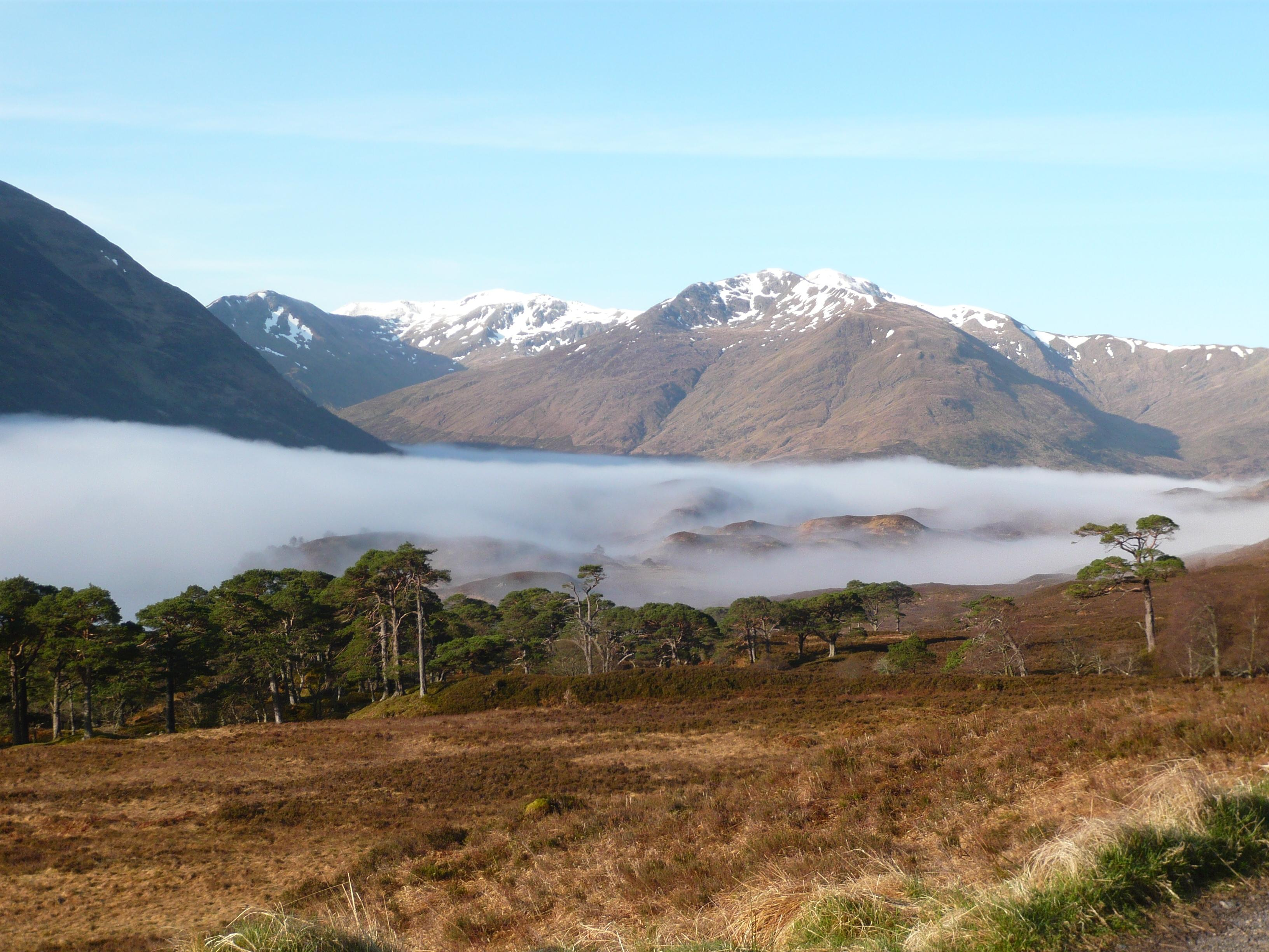 Morning mist in Glen Affric
